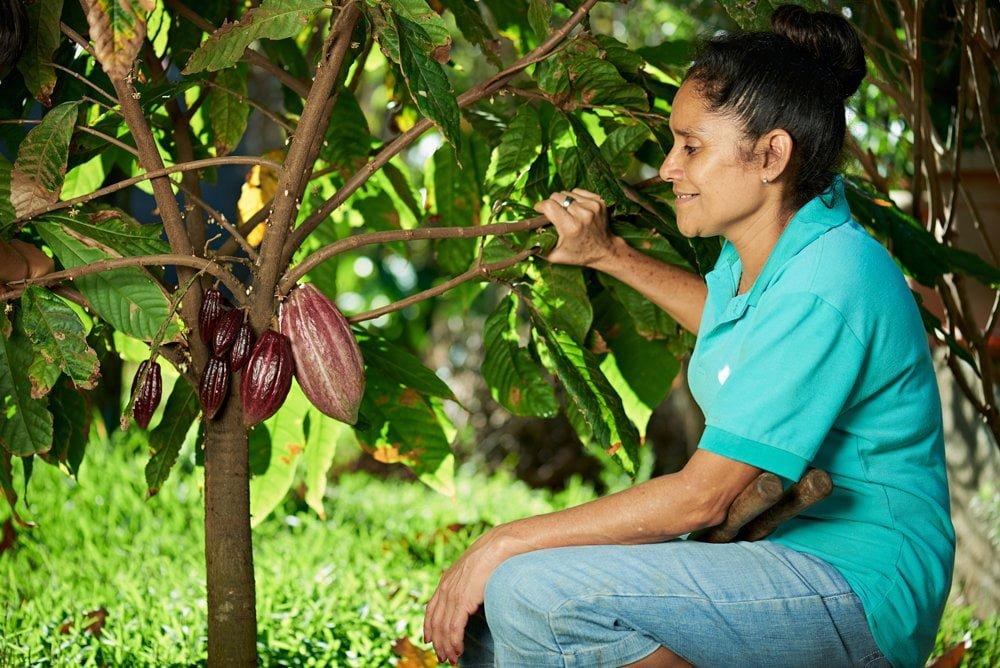 cocoa-farmer